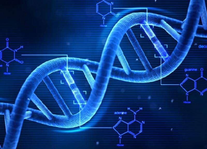 儿童成长基因